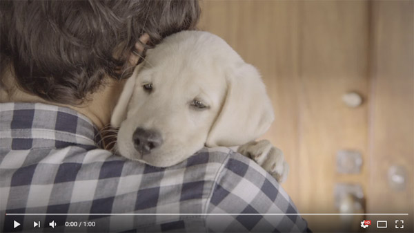 Budweiser Puppy Super Bowl Commercial 2014