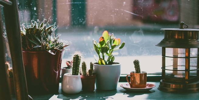 Cacti in front of a window
